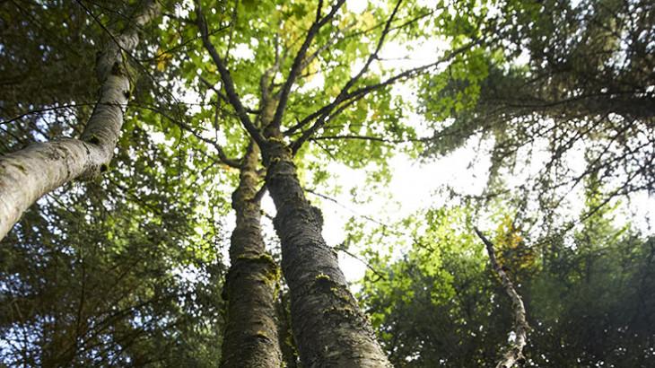 Semaine utilisateurs - Données forestières